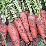 Семена моркови Абако-Abaco F1, фр. 1, 6-2, 0 - 200 000 семян, фото 2