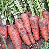 Семена моркови Абако-Abaco F1, фр. 2, 0-2, 4 - 200 000 семян, фото 2