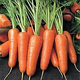 Семена моркови Абако-Abaco F1, фр. 2, 0-2, 4 - 200 000 семян, фото 3