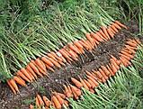 Семена моркови Абако-Abaco F1, фр. 2, 0-2, 4 - 200 000 семян, фото 4