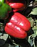 Семена перца Красный Рыцарь (X3R) F1 - Red Knight X3R F1 - 500 семян