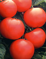 Семена томата Дебют F1-Debut F1 - 1000 семян