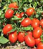 Семена томата Фуззер F1-Fuzzer F1 - 1000 семян