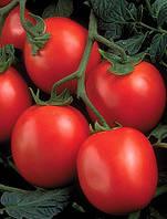 Семена томата Перфектпил F1-Perfectpeel F1 - 1000 семян
