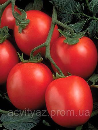 Семена томата Перфектпил F1-Perfectpeel F1 - 25 000 семян