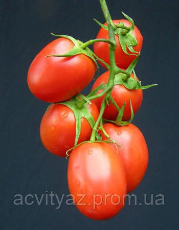 Семена томата Рапит-Rapit F1 - 25 000 семян