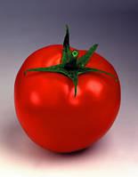 Семена томата Таня-Tanya F1 - 1000 семян