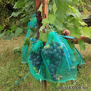 Сіточка-рукав для захисту винограду від ос