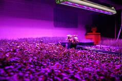 Особенности светодиодной фитолампы для растений