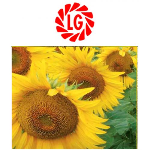 Семена подсолнечника лимагрейн ЛГ 5478 (классический)