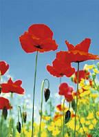 Фотообои с цветами Поле маков Код: 371