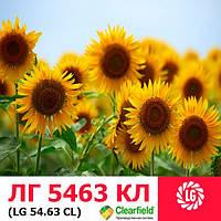 Семена подсолнечника лимагрейн лг 5463 кл (евролайтинг)
