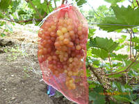 Защитная сетка для кистей винограда (5 кг)