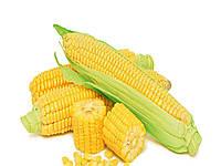 Семена кукурузы Лимагрейн ЛГ 30360 (LG 30.360) ФАО – 340