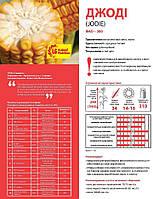 Семена кукурузы Лимагрейн Джоди (JODIE) ФАО – 380