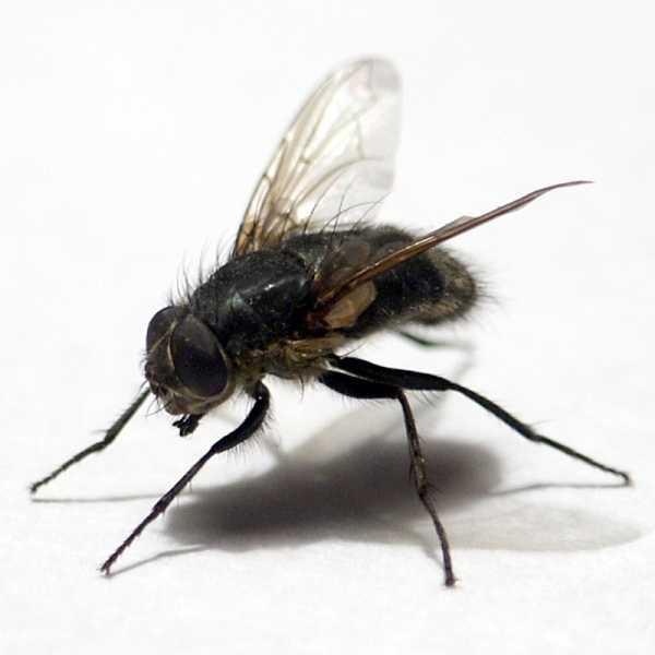 От мух