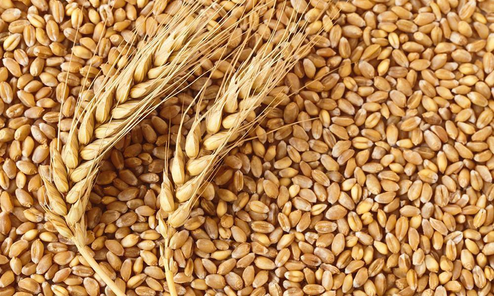 Пшеница органическая 500 г