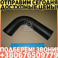 ⭐⭐⭐⭐⭐ Патрубок радиатора МТЗ 1221/1522 верхний