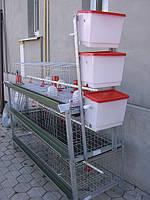 Клетки для содержания бройлеров