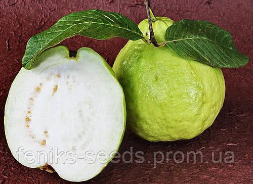 Семена Гуава белая