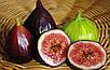 Семена Инжир Черный, фото 5