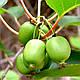 Мини Киви семена, фото 2