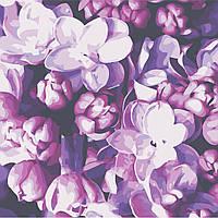 Картина за номерами Квіти бузку AS0512 40*40см