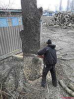 "Спил деревьев - Обрезка деревьев ""под ключ"". Киев."