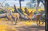 Книга Тварини дольодовикового періоду / Тварини дольодовикового періоду, (рос, укр мови), 8+, фото 4