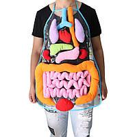 Прозора модель фартух внутрішня будова органів людського тіла 3D Фартук халат органов человеческого тела