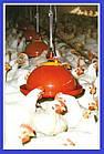 Автоматическая колокольная поилка для цыплят, кур Jumbo Junior, фото 5