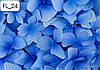 Каталог фотопечати - Цветы