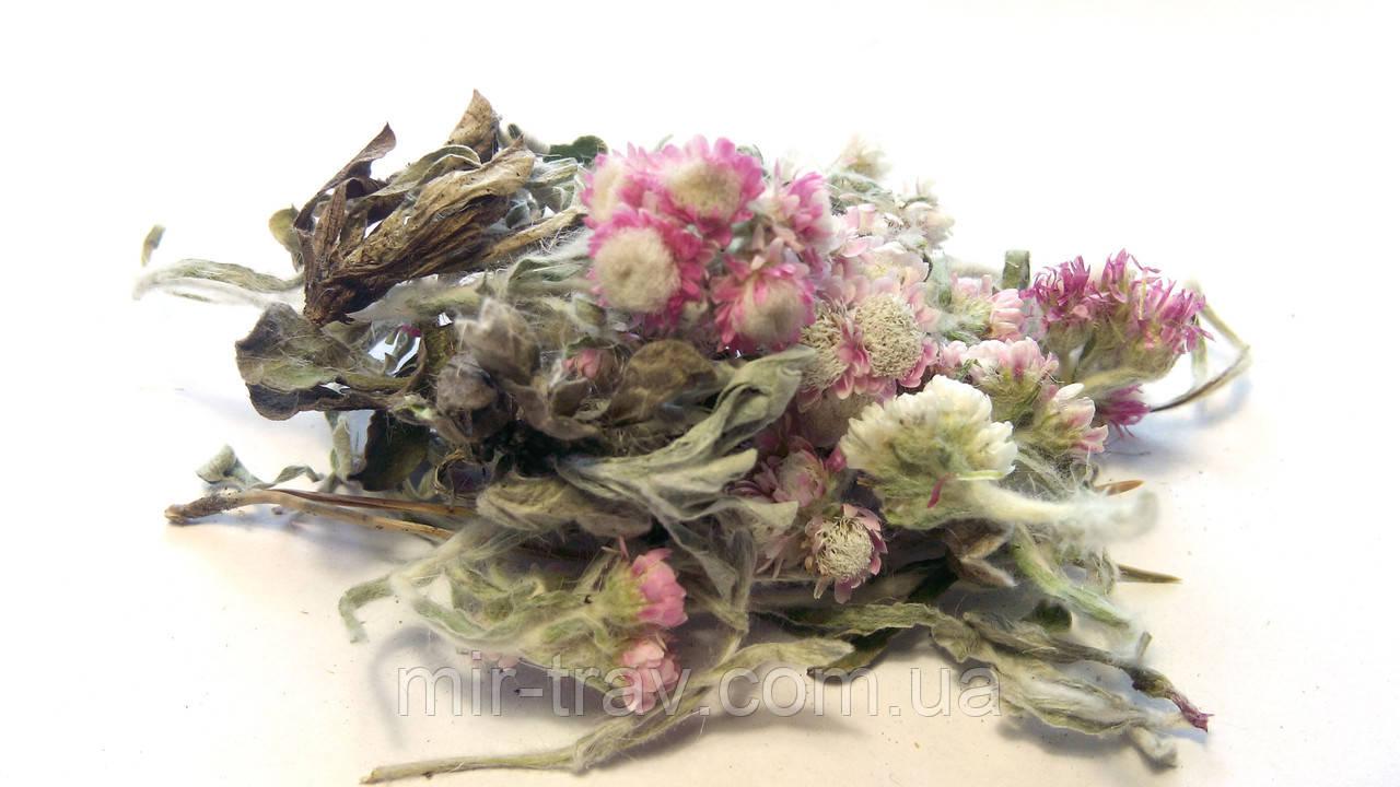 Сухоцвет трава (Кошачья лапка двудомная) 10 грамм
