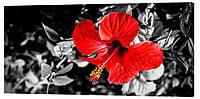 Картина на холсте Декор Карпаты Цветы 50х100 см (c716)