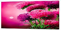 Картина на холсте Декор Карпаты Цветы 50х100 см (c1089)