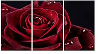 Модульная картина Декор Карпаты 100х53 см Роза (M3-t7)