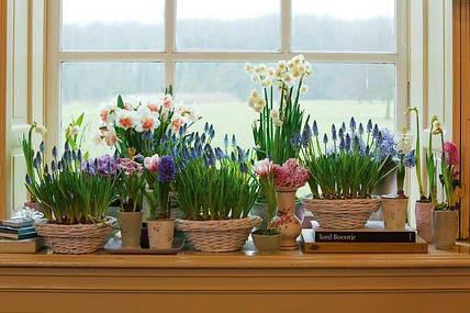 6 ошибок при удобрении комнатных цветов, о которых вы могли не знать