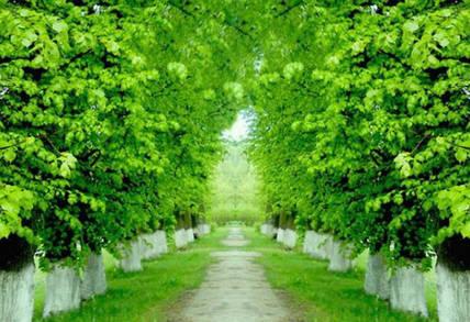 5 главных правил побелки деревьев этой весной