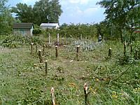Расчистка участка под строительство в Киеве и Киевской области, фото 1