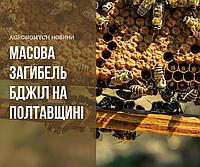 Пасічники погрожують спалити поля фермерам Полтавщини за померлих бджіл