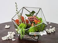 Флорариум со мхом и стабилизированными растениями «Coral reef», G5