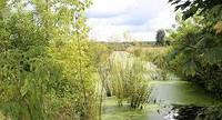 Можно ли пить воду из реки, озера, болотной канавы?