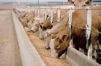 Вітамінно мінеральні корми для корів телят бичків дробина пивна гранула