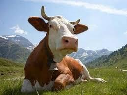 Універсальний корм для  для корів телят бичків птиці, фото 1