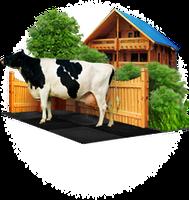 Продам корм для дійних корів