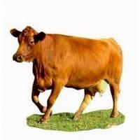 Агрокорм для животных пивная дробина