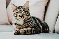 Корма для котов: обзор ассортимента