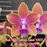 """Подростки орхидея. Сорт Phal. Miki Golden Sand '1363', горшок 1.7"""" без цветов"""