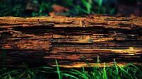Кора в природе: дуб, сосна, берёза