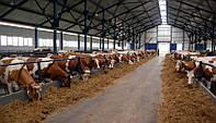 Строительство,ремонт и реконструкция ферм КРС,свиноферм.пром строений в
